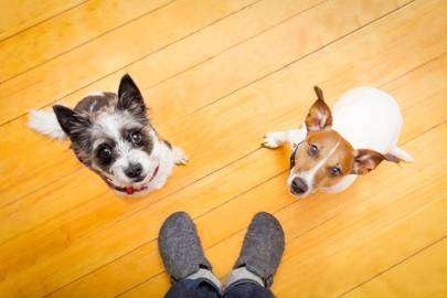 Your dog pays more attention when you talk in that silly-billy, ickle-pickle voice