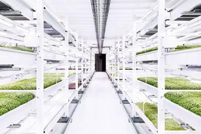 Growing underground: the hydroponic farm hidden 33 metres below London