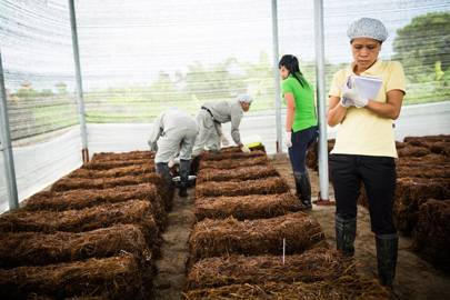 Trang Tran's team in the testing greenhouse of their production lab. Fargreen helps Vietnamese rice farmers use biowaste waste to grow mushrooms