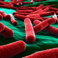 False colour image of E. coli bacteria