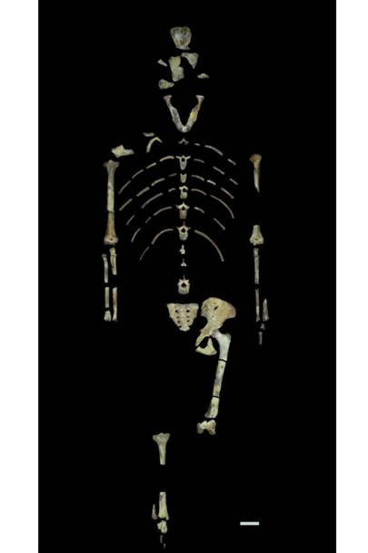 Scans of 'Lucy's' bones cast doubt on how our early human ancestors lived