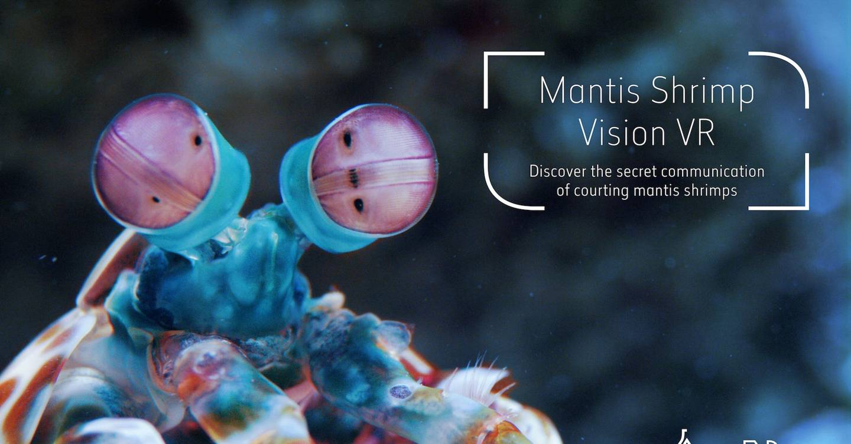 Virtual reality 'shrimp vision' experience opens at ...