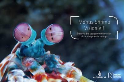 Shrimp vision VR