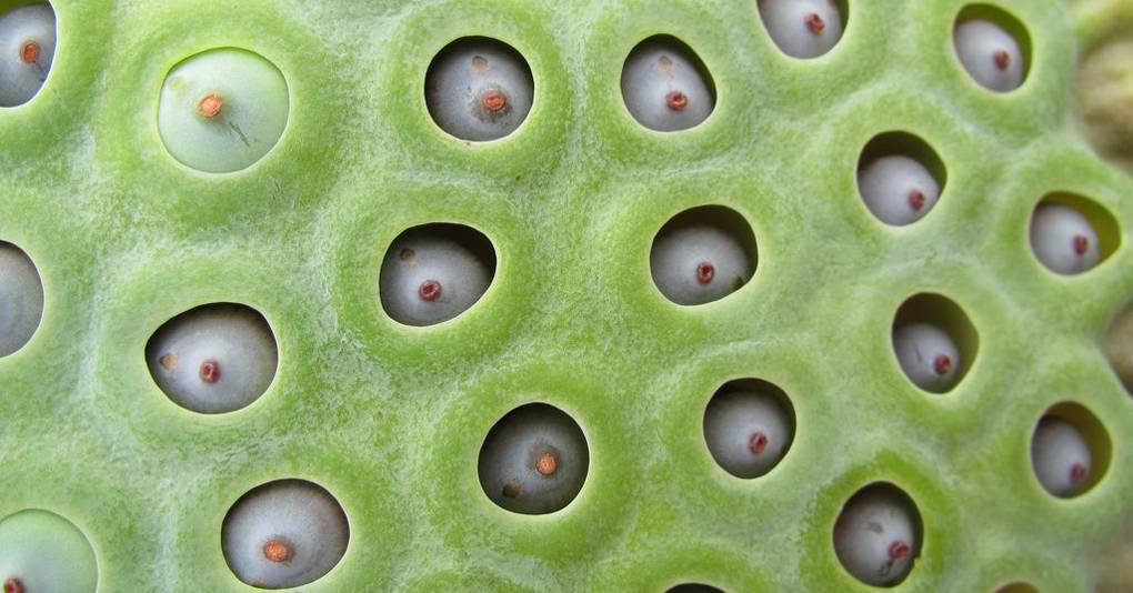 What Is Trypophobia And What Causes Fear Of Bubbles And Tiny Holes Wired Uk