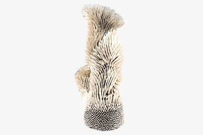Zemer Peled: Never Looking Back