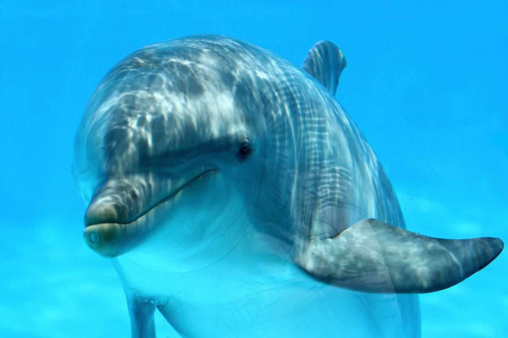 dolphin u0027translator u0027 aids human animal interaction wired uk