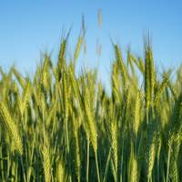 Agrivi farm management software helps farmers maximize crop planning and growth