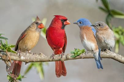 'Shazam for birdsong' Warblr will name that tweet