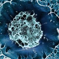 Still life of a frozen stem cell