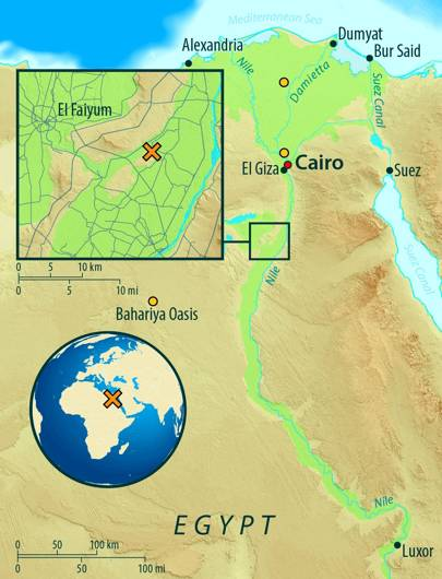 This map of Egypt shows the archaeological site of Abusir-el Meleq (orange X), and the location of the modern Egyptian samples used in the study (orange circles)