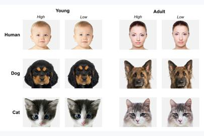 Baby schema in adults, babies and pets