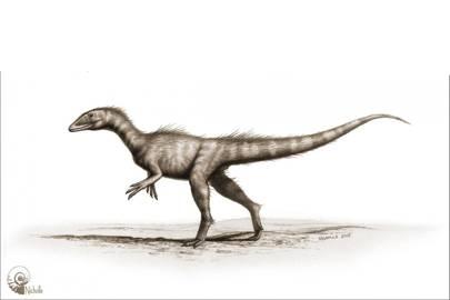 Artist's impression of Dracoraptor hanigani