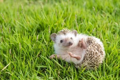 Half of the UK's wildlife is in danger, including hedgehogs and dormice