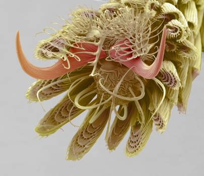 Mosquito Foot