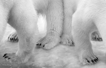Black and white: Polar pas de deux