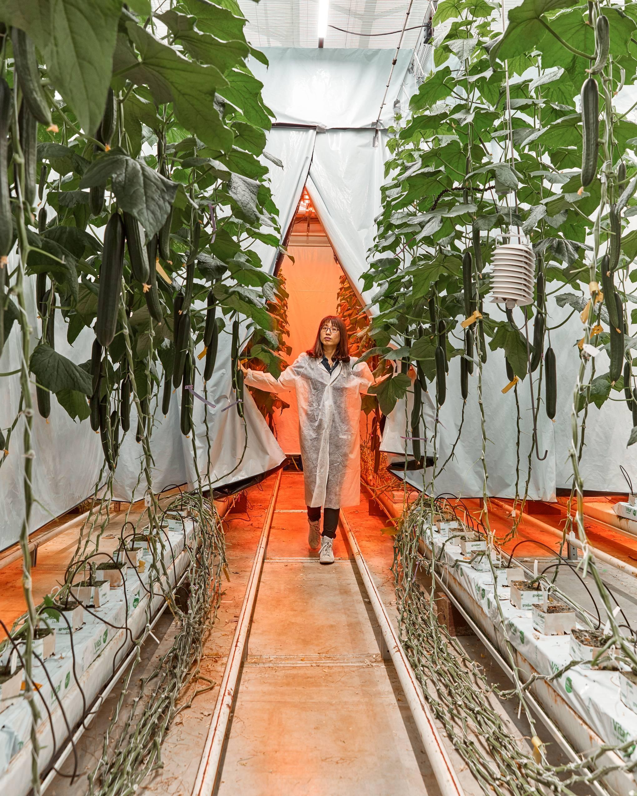 Feeding the 11 billion: the tiny Dutch town ending our food