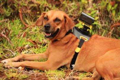 Sony ActionCam + dog harness