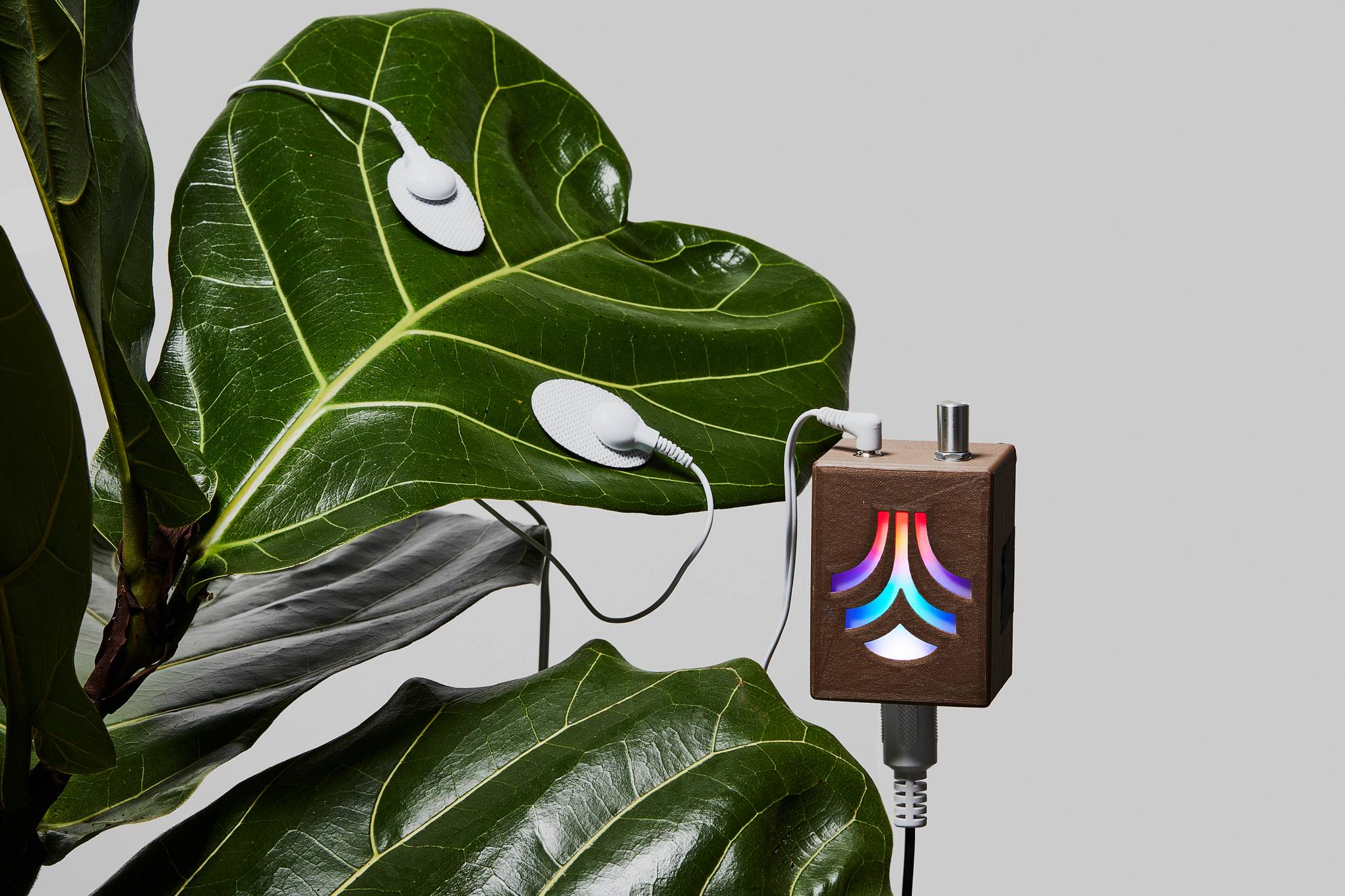 These clever gadgets will help your ailing houseplants thrive