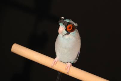 The future of flying robots is in the claws of a goggle-wearing parrot - Technology Updats