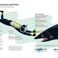 How to survive (and prevent) a shark attack