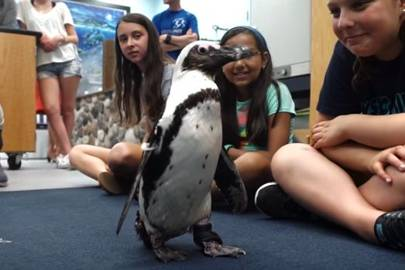 Penguin is fitted with a 3D printed boot