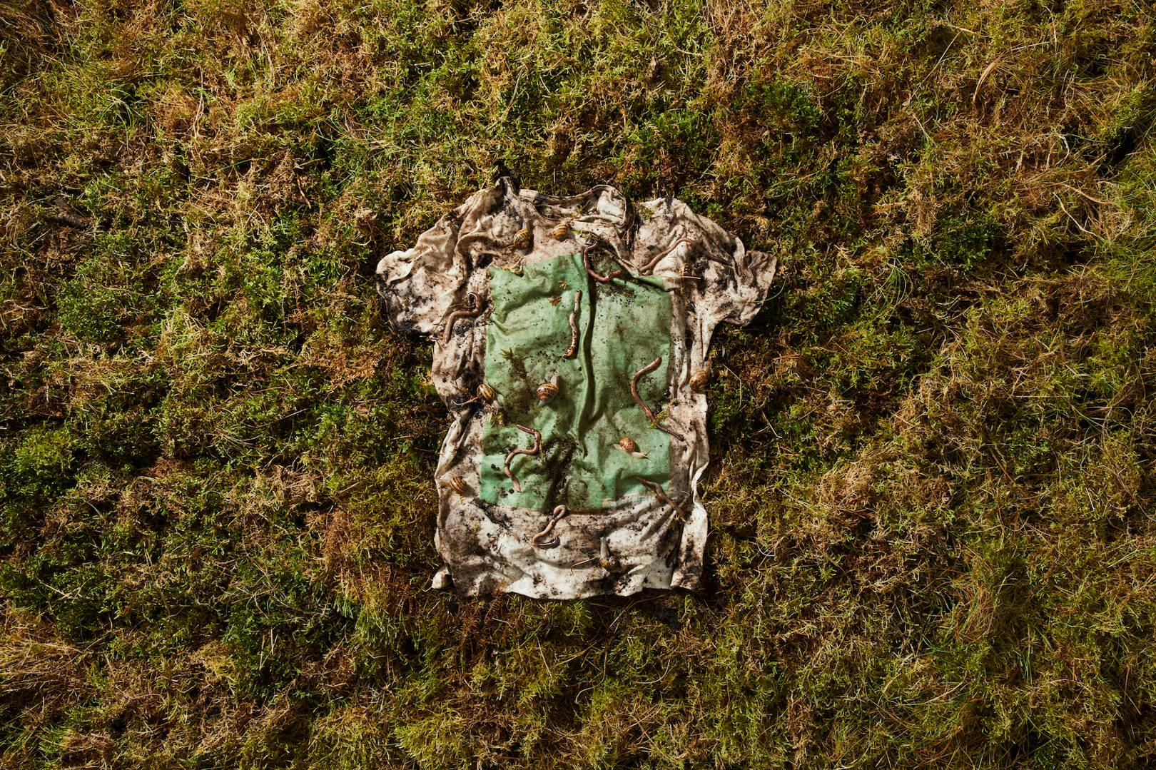 This t-shirt is 100% plant and algae. It biodegrades in 12 weeks
