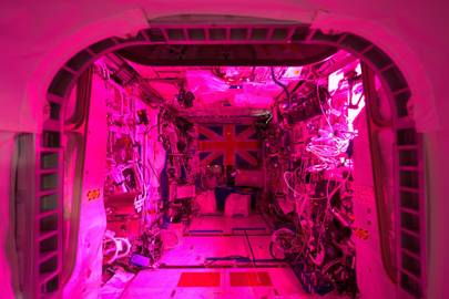 Tim Peake: growing plants in space