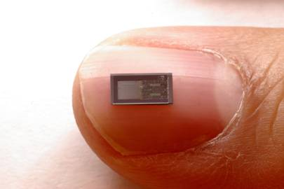 The bioresorbable sensors are tiny