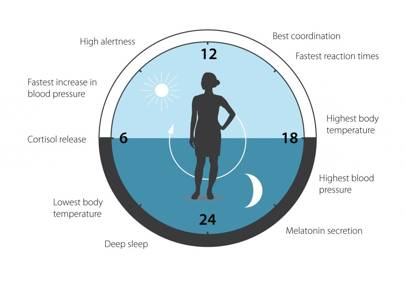 Nobel Prize for medicine 2017 : the circadian clock