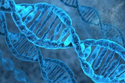 Gene : DNA strand