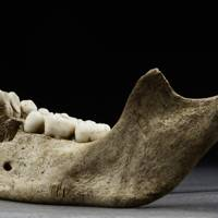 Jane's mandible