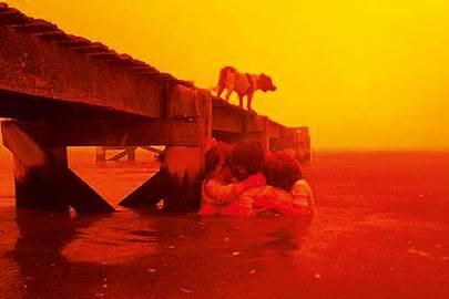 Firestorm, a Guardian iDoc