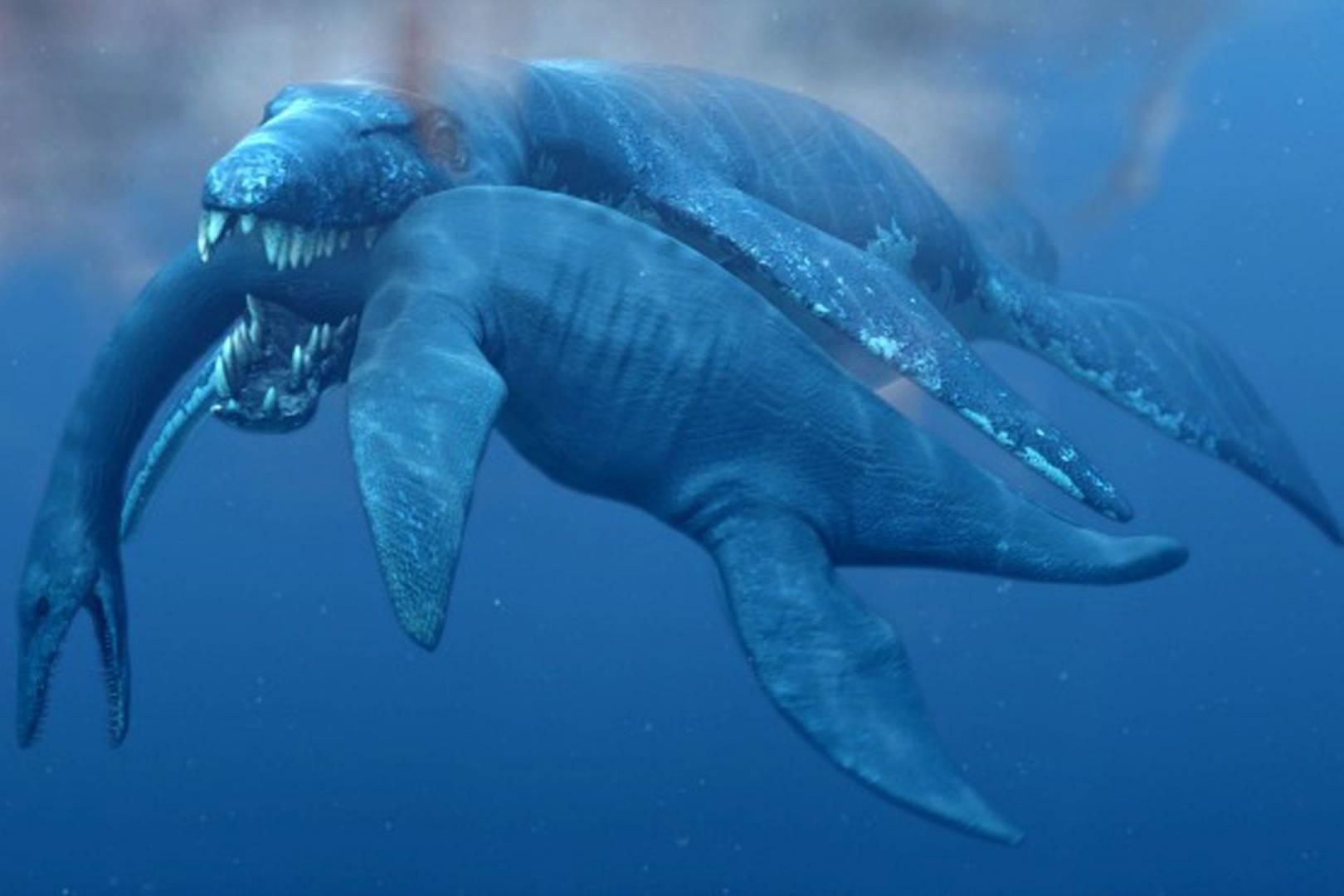 san francisco 62eb1 955af Palaeontologists identify the Predator X fossil   WIRED UK
