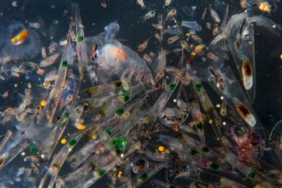 Toxic time bomb: Here's the science that explains why microbeads are a disaster