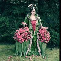 Camellia Contessa