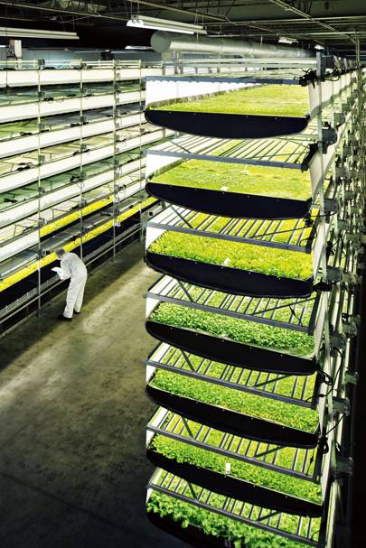 Aerofarm Has Built The World S Largest Vertical Farm
