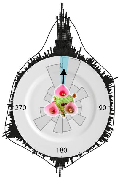 Researchers found the ideal orientation for the dish was 3.20 degrees clockwise, with the pickled onions pointing away from the diner