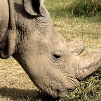 Tinder rhino