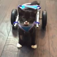 Cassidy the kitten