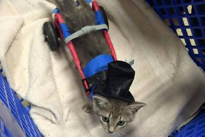 3D printing tech is helping disabled kittens walk again
