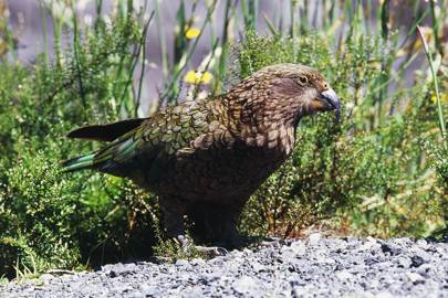 Young birds explore the world just like human children