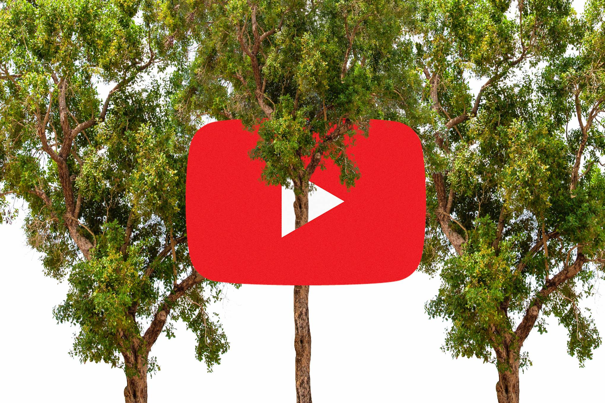 YouTubers (and Elon Musk) want to plant millions of trees. Will it help fight climate change?