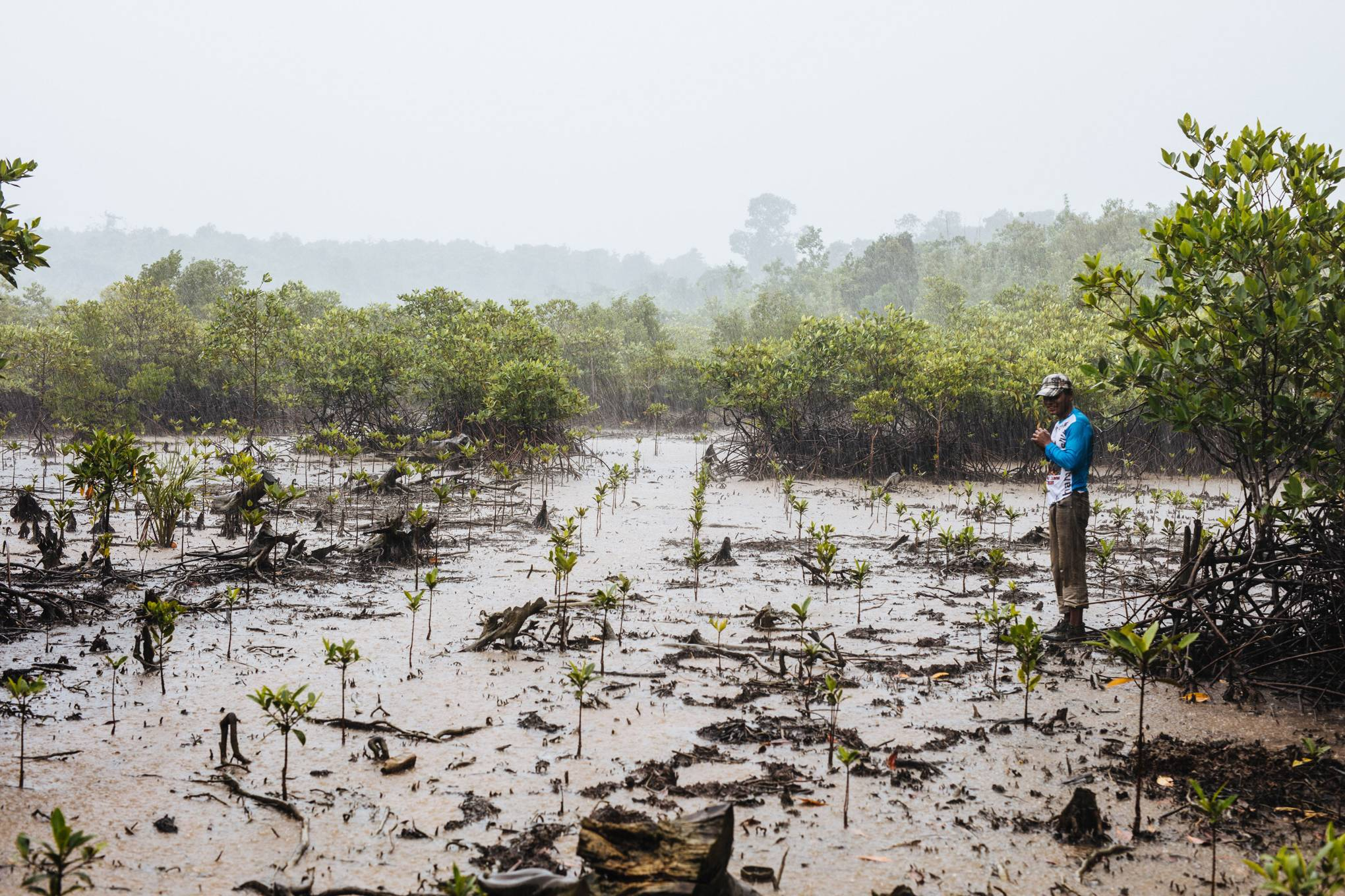 Tropical forests are dying  Seed-slinging drones can save