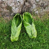 Skunk Cabbage Slippers