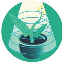 Step 2: Investigate chlorophyll