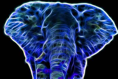 Ecologist develops elephant-inspired hearing aid