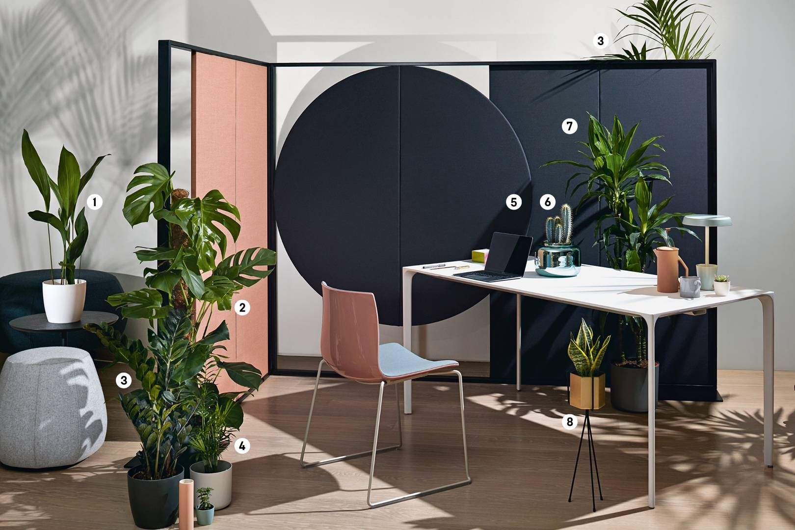 How to use office plants to boost productivity and job