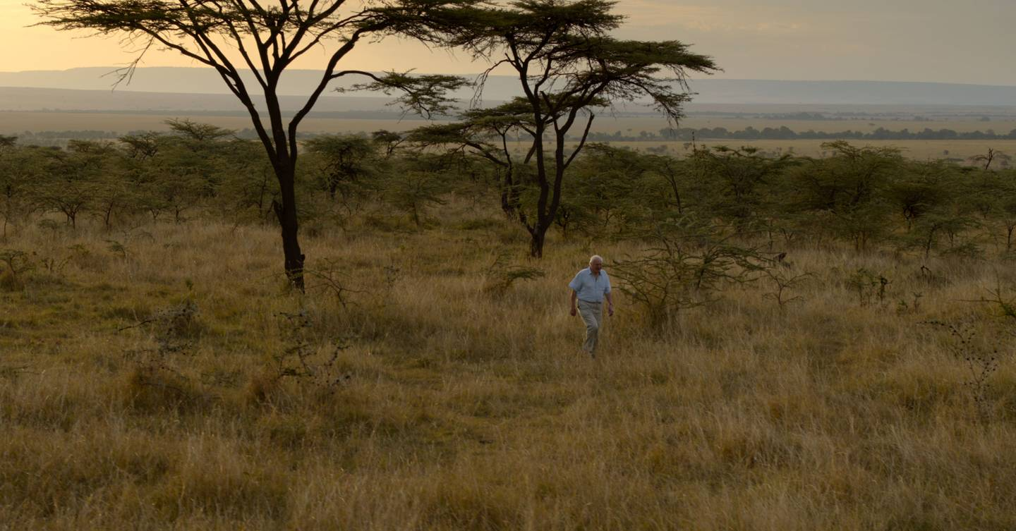 David Attenborough's A Life On Our Planet is an obituary for the Earth