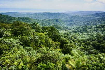 El Yunque rainforest, Puerto Rico - rainforests are particularly vulnerable to humans' ecological impact