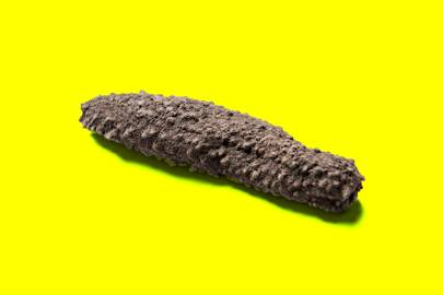 Europe's lucrative, illegal, trade in sea cucumbers is booming